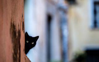 Întunecate ca noaptea: 20 de imagini în care pisicile negre sunt irezistibile