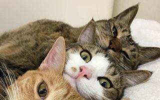 De ce ne plac pisicile: 15 imagini care demonstrează că sunt irezistibile