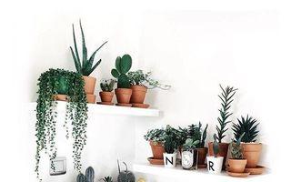 Cum să expui o colecție de plante. 30 de idei din care să te inspiri