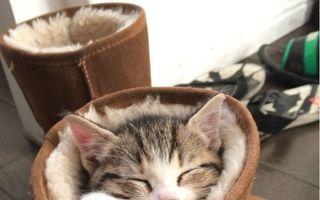 Animalele sunt adorabile chiar şi atunci când dorm! 20 de imagini care te vor înveseli