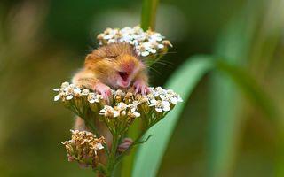 12 animale care știu să râdă: Și necuvântătoarele se distrează!