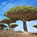 Cei mai spectaculoşi copaci din lume. 35 de imagini