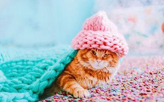 Pisicile cuceresc internetul: Kotleta, roșcata care a ajuns model pe Instagram