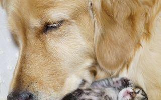 Sensibilitatea animalelor nu cunoaşte limite. 15 imagini incredibile