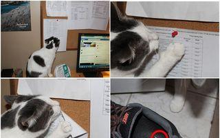 Pisicile pot fi diabolice uneori. 15 imagini amuzante