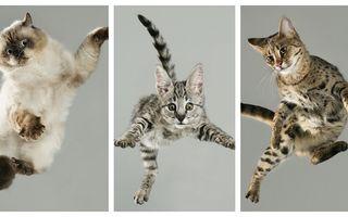 Pisicile zburătoare: Ce fețe au când se trezesc în aer!