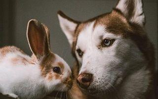 20 de animale care au un frate geamăn din altă specie. Sunt adorabile!