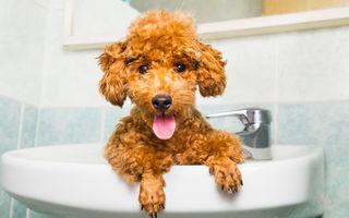 De ce te urmărește câinele la baie?