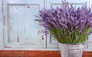 Plante care te ajută să dormi mai bine. Trebuie să le ai în casă!