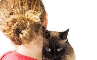 7 semne că pisica ta este deprimată