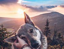 """Câinele cu vino-ncoa': Un exemplar din """"rasa Instagram"""" pozează ca un model"""