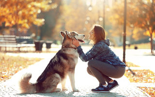 10 secrete pe care le știe câinele despre tine