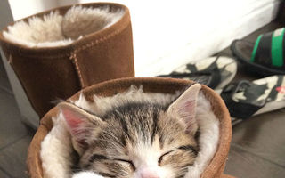 20 de animale care dorm pe unde apucă: Ai vrea să fii în locul lor!