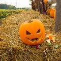 Pregătiri pentru Halloween 2018: Dovlecii sunt la mare căutare