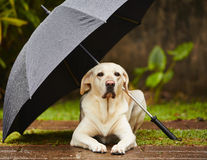 De ce se sperie câinele de furtună?