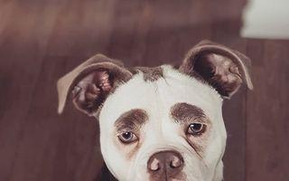 Cele mai expresive animale din lume. 25 de imagini amuzante