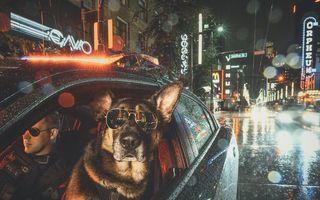 Patrula cățelușilor: Polițiștii canadieni și câinii lor au lansat un calendar în scopuri caritabile