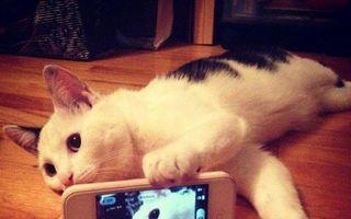 Selfie la un alt nivel: 25 de pisici extrem de amuzante