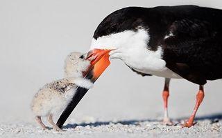 Animalele și familiile lor. 20 de imagini care îți vor ajunge la suflet!