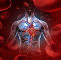 20 de lucruri interesante despre sânge și sistemul circulator