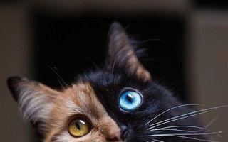 Te vor surprinde cu înfăţişarea lor! 20 de animale rare