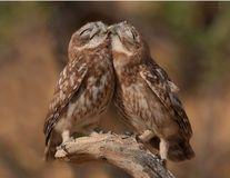 Dragostea există și în natură! Perechi de animale care te vor înduioșa