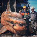 Creaturi de coșmar: Un pescar rus scoate la suprafață monștrii din adâncuri