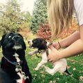 Reacţiile animalelor atunci când îşi întâlnesc pentru prima oară noii prieteni. Sunt adorabile!