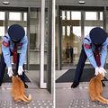 Două pisici încearcă de ani de zile să intre într-un muzeu. Nu reușesc, dar nici nu se lasă - VIDEO
