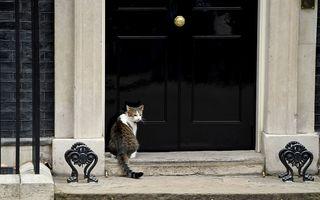 Scenă amuzantă la ușa prim-ministrului britanic: Motanul Larry, salvat din ploaie de un polițist - VIDEO