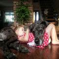 Câinii din rasa Dog German sunt cei mai simpatici uriași. 35 de imagini care o demonstrează