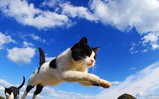 Pisicile sunt drăguţe indiferent de situaţie! 20 de imagini adorabile