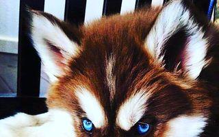 Câinii cu semne distinctive sunt adorabili! 20 de imagini