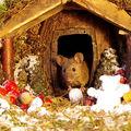 Rudele lui Jerry sunt fericite: Un fotograf a găsit șoricei în grădină și le-a construit un sat în miniatură