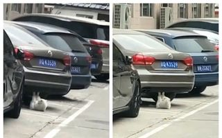 Ciudățenia anului: Pisică filmată în timp ce face abdomene sub o mașină - VIDEO