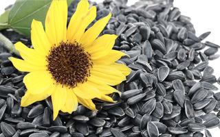Cât de sănătoase sunt semințele de floarea-soarelui