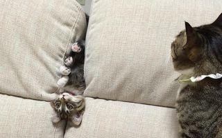 Pisicile pot fi ciudate uneori: 20 de imagini care o demonstrează