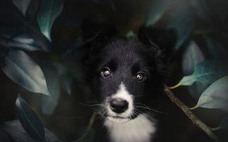 Cei mai frumoși câini care știu să pozeze: 50 de imagini superbe cu cel mai bun prieten al omului
