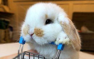 Animalele pot fi incredibil de simpatice. 17 imagini înduioşătoare