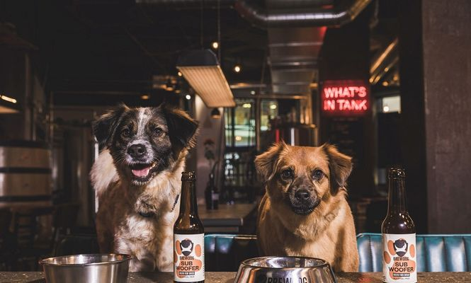 bere pentru câini