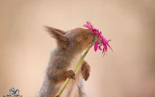 Cele mai frumoase imagini cu veverițe pe care un fotograf le-a făcut după ce le-a urmărit 6 ani