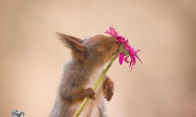 veverița
