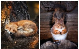 Acolo unde natura e sfântă: 41 de minuni pe care le poți vedea în pădurile din Finlanda