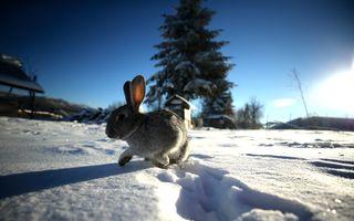 Turcia s-a îmbrăcat în alb: 15 imagini în care iarna face spectacol