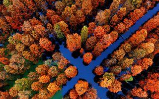 Labirintul din pădurea inundată: 20 de imagini superbe cu o minune a naturii