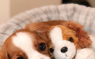 Drăgălăşenie infinită: 30 de imagini cu cei mai drăguţi căţei