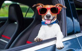 Isprava unui câine lăsat în mașină de stăpânul său: A început să claxoneze nerăbdător - VIDEO