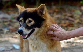 Prietenii lui Zorro. 20 de animale simpatice care s-au născut 'mascate'