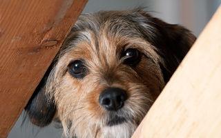 Pierderea unui câine poate fi la fel de dureroasă precum cea a unei persoane iubite