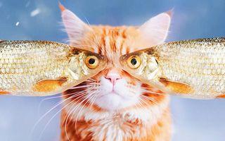 Reginele internetului: Cele mai frumoase imagini cu pisici din 2018